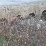 Torrente Bordonaro-canali otturati