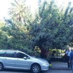 crollo albero villa mazzini4