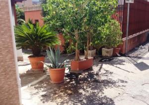 nicaragua_piante