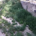 torrente Annunziata