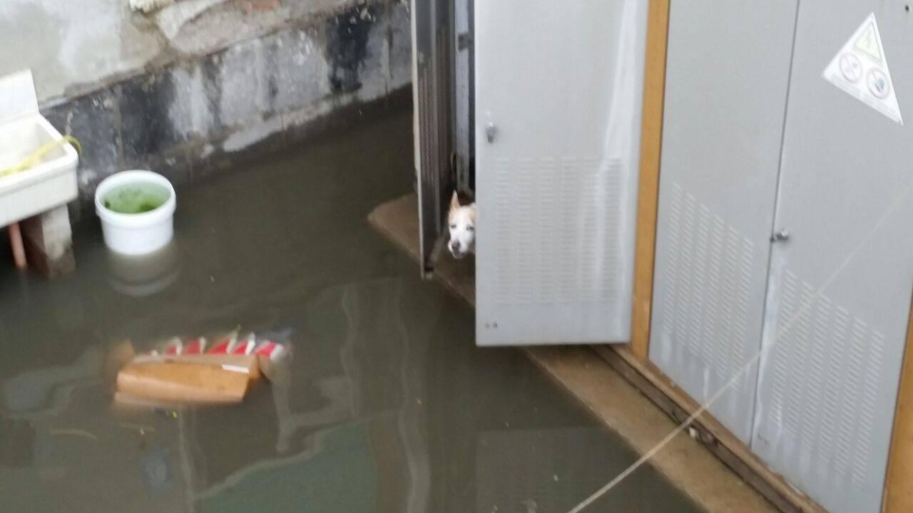 un cane bloccato dall'acqua