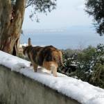 Messina nevicata 31 dicembre 2014 (6)