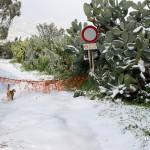 Messina nevicata 31 dicembre 2014 (7)