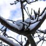 Nevicata del 30 dicembre 2014 Messina Dinnamare (8)