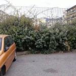 Vegetazione trascurata