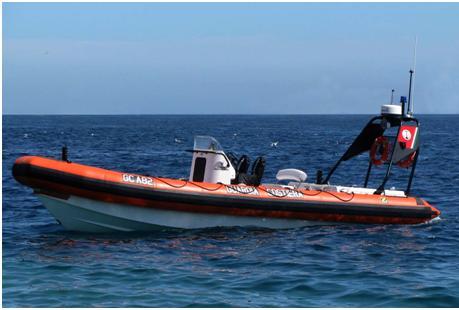 Squalo bianco nello Stretto di Messina: preoccupazione per i bagnanti