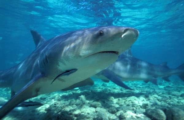 Messina paura nello stretto avvistato uno squalo di 5 metri